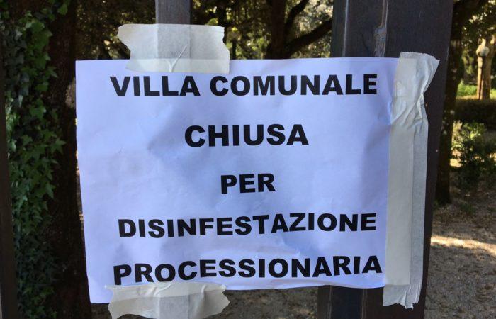 Villa Comunale chiusa per disinfestazione Processionaria