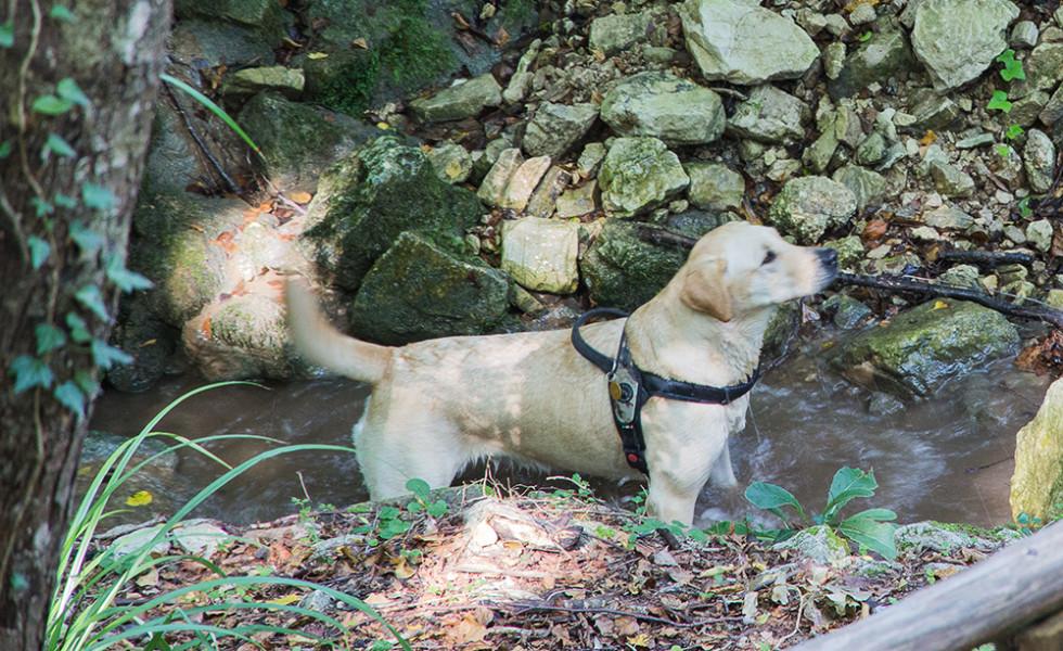 escursione a monte calvello (31)