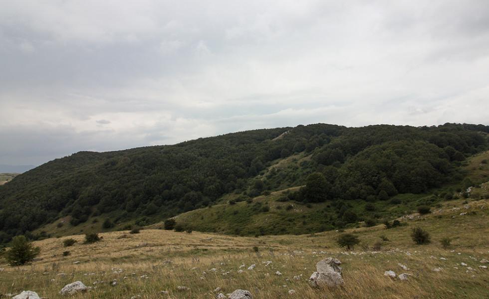 passeggiata verso i pizzi (101)bosco e' costialongo
