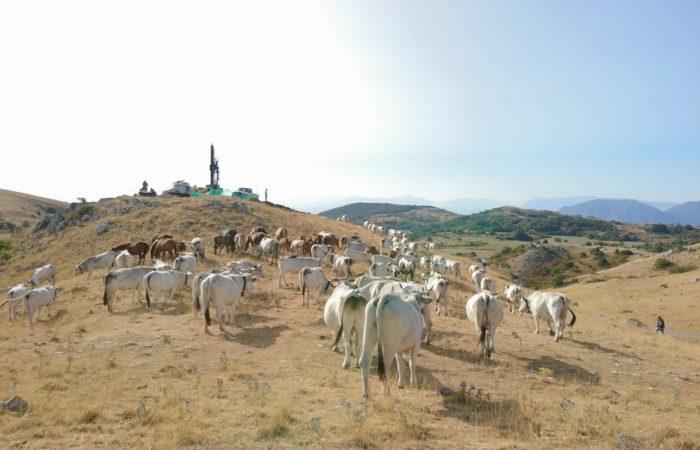 """""""La rivolta delle vacche"""": bloccati i lavori dell'eolico"""