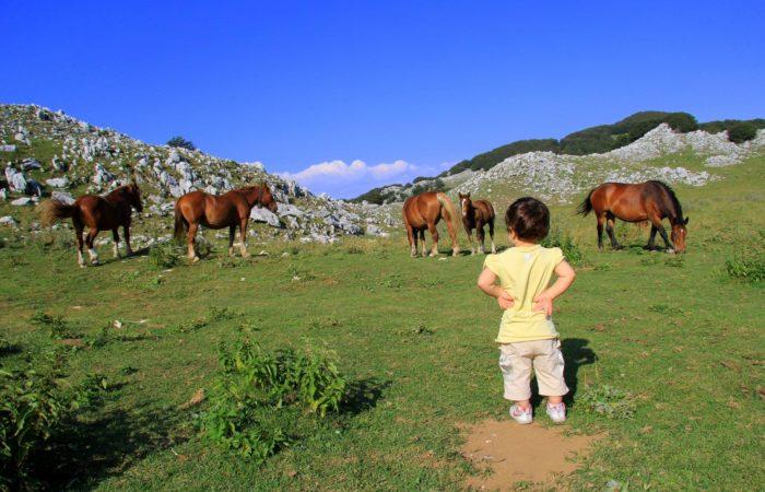 """Parco Nazionale del Matese, la Consulta: """"Perché attendere ancora?"""""""